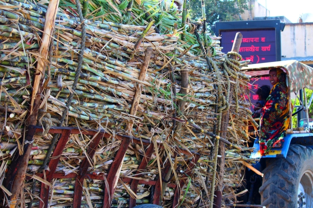 sugar cane transport