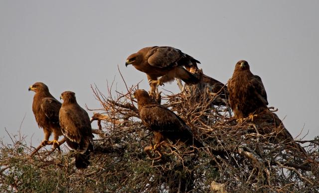 eagles jorbeer